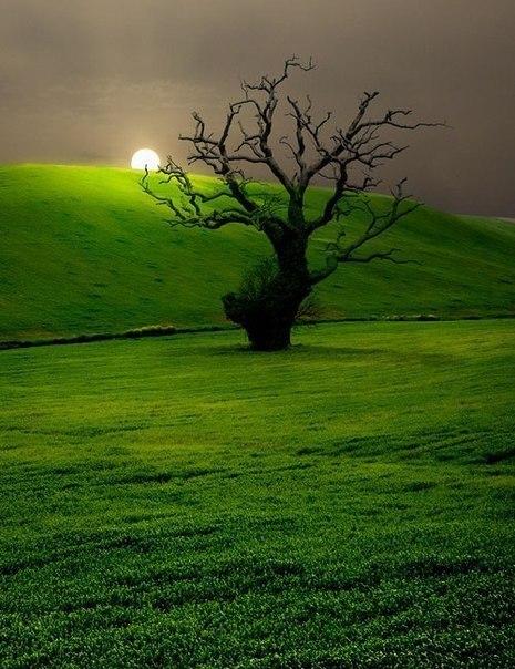 Красивое одиночество в природе